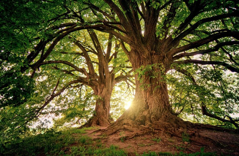 Cura degli alberi